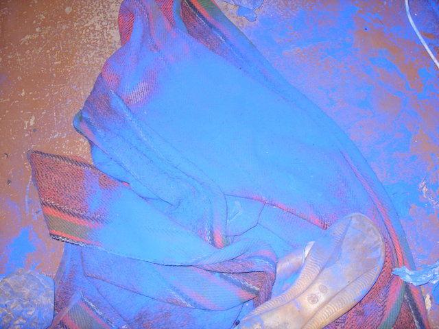 blue-dog-03