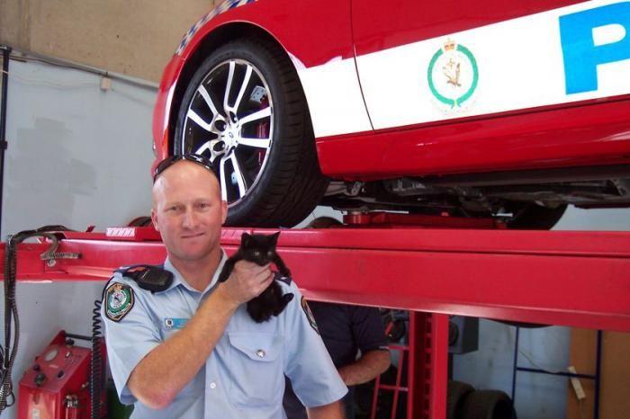 cat-police-car-03