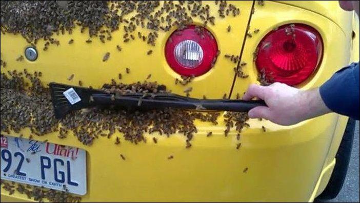 Нападение пчел