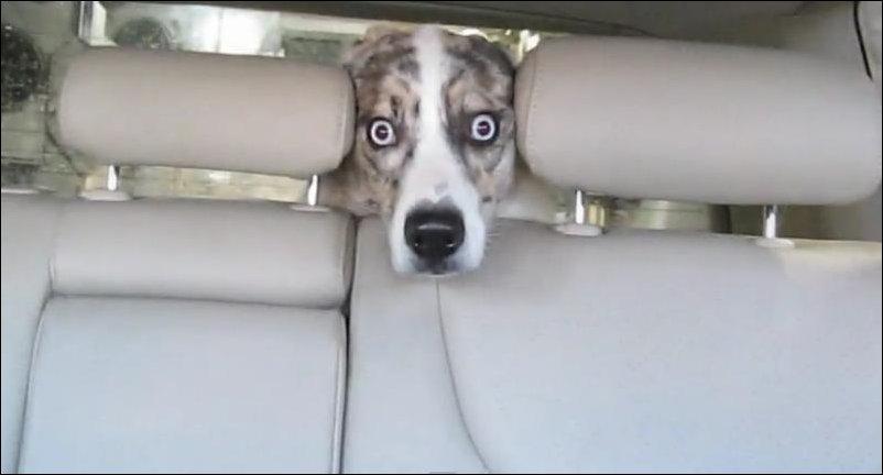Собака впервые на автомойке