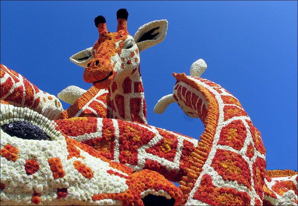 Парад цветов в Нидерландах