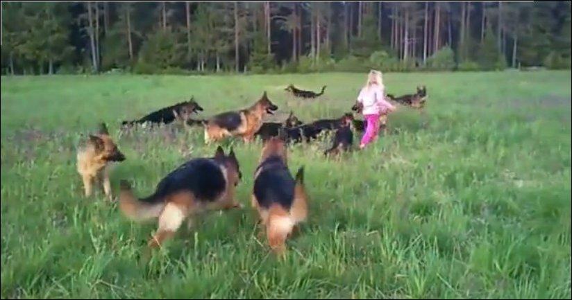 Пятиленяя девочка и 14 немецких овчарок