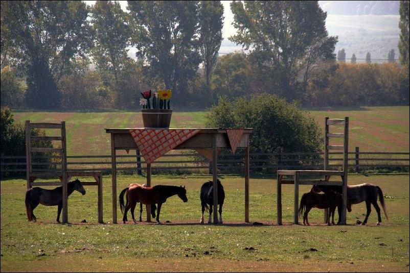 Гигантский стол в качестве навеса для лошадей