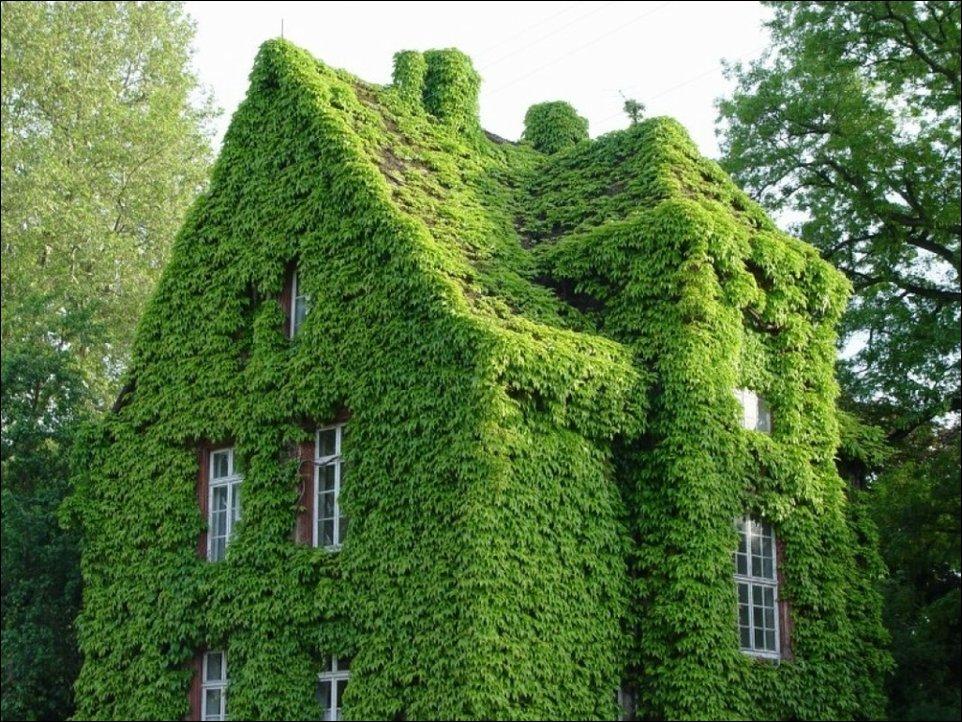 Дом увитый плющом