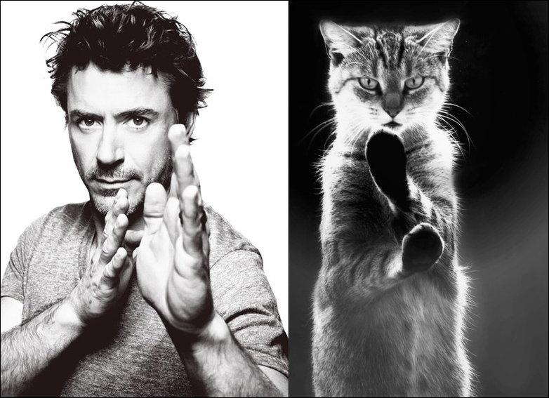 Коты и мужчины