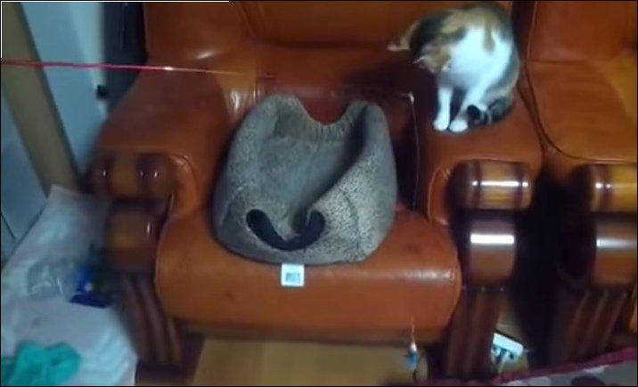 Кот играет с котом