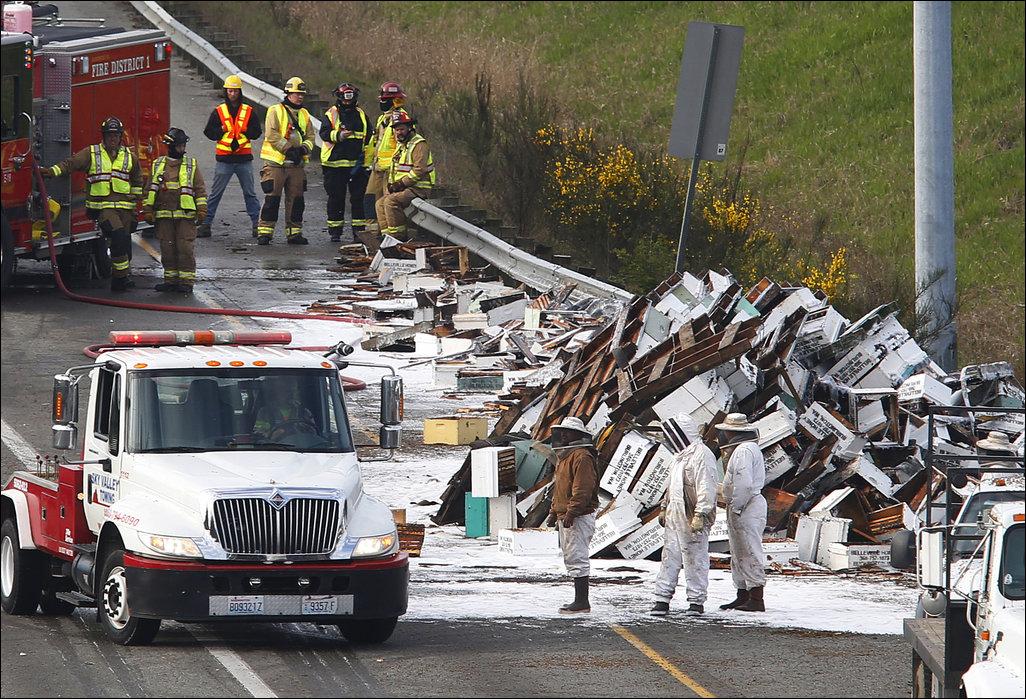 Под Сиэтлом перевернулся грузовик с пчелами