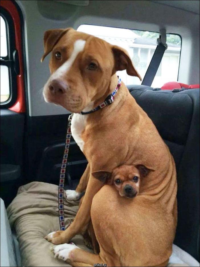 Собаки лучшие друзья