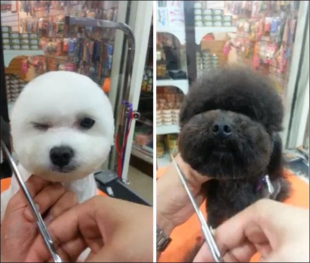 Собачьи стрижки