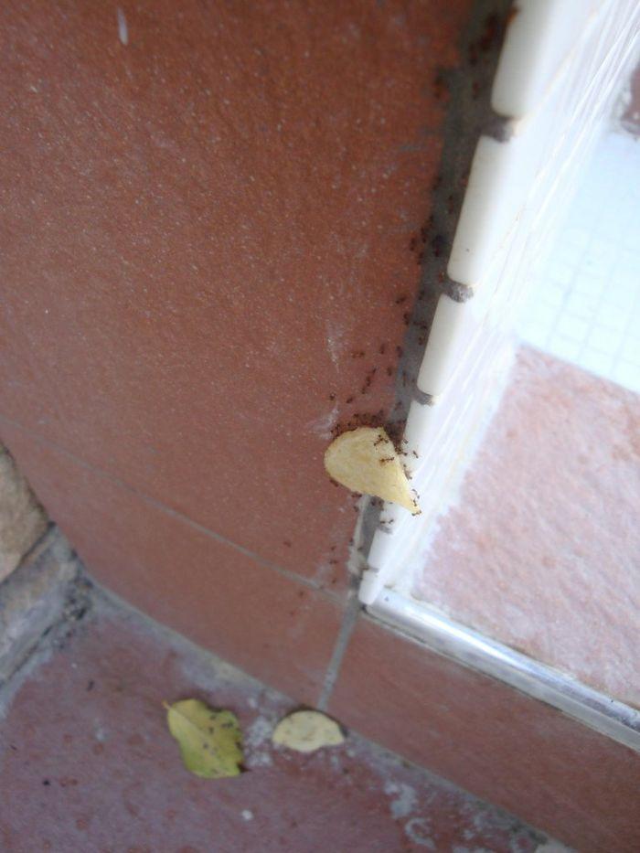 ants-team-work-19