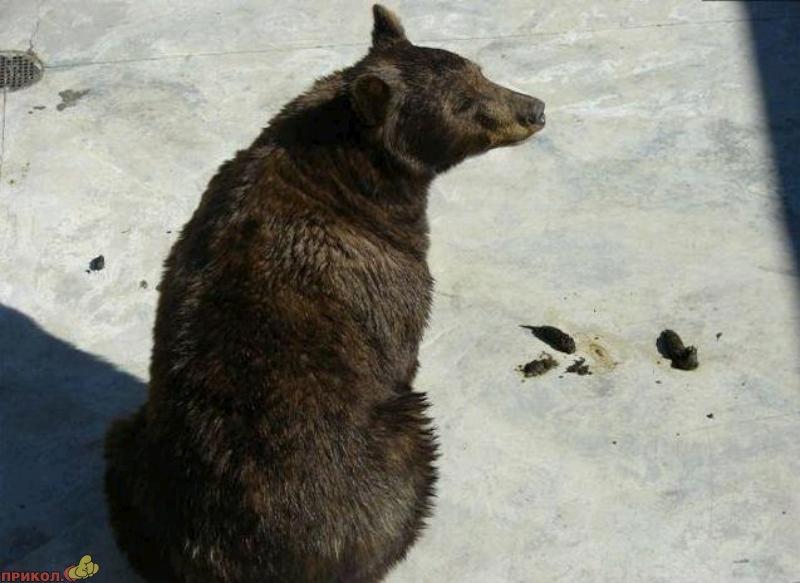 bear-climbs-ladder-01