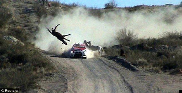 car-hits-horse-01
