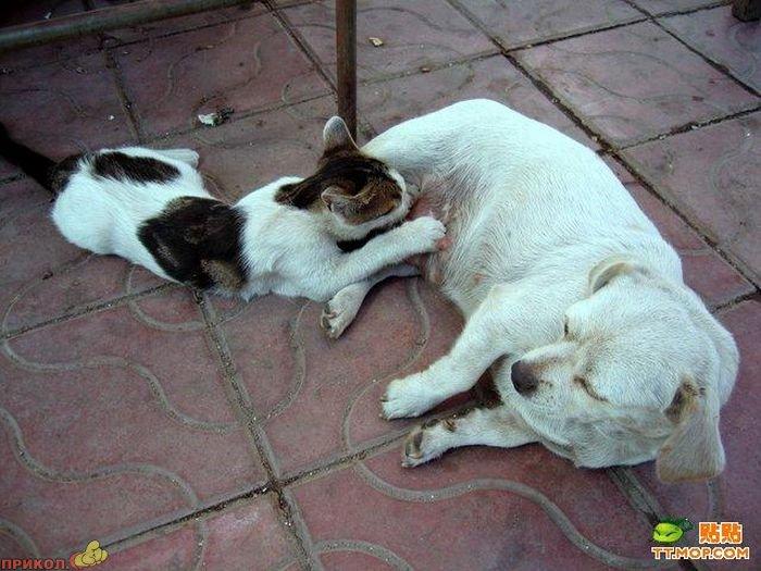 cat-dog-01