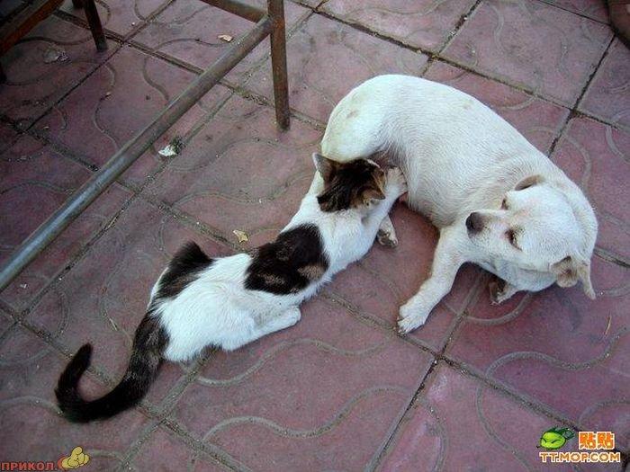 cat-dog-03