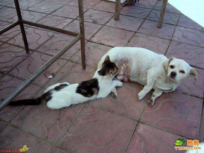 cat-dog-04