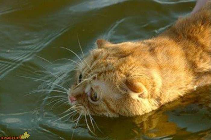 cat-swimming-01