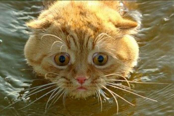 cat-swimming-02