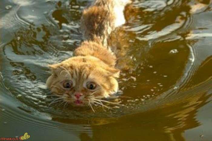 cat-swimming-03