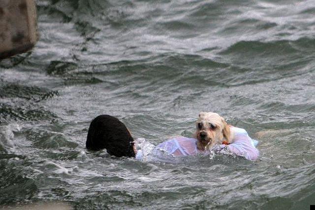 dog-rescue-12