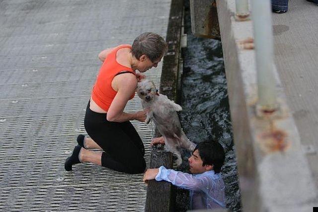 dog-rescue-14