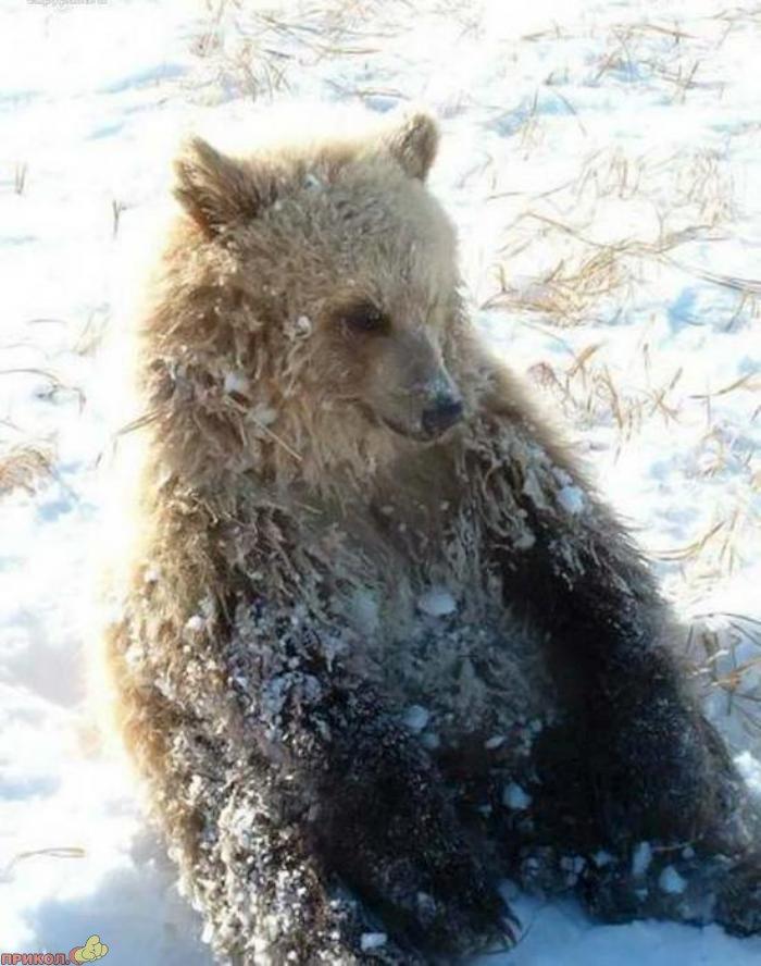 friendly-bears-03