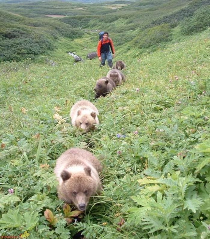 friendly-bears-05