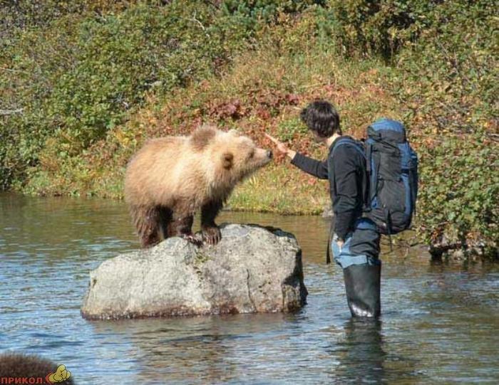 friendly-bears-08