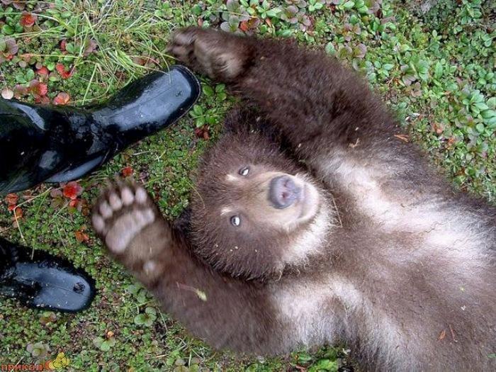 friendly-bears-09