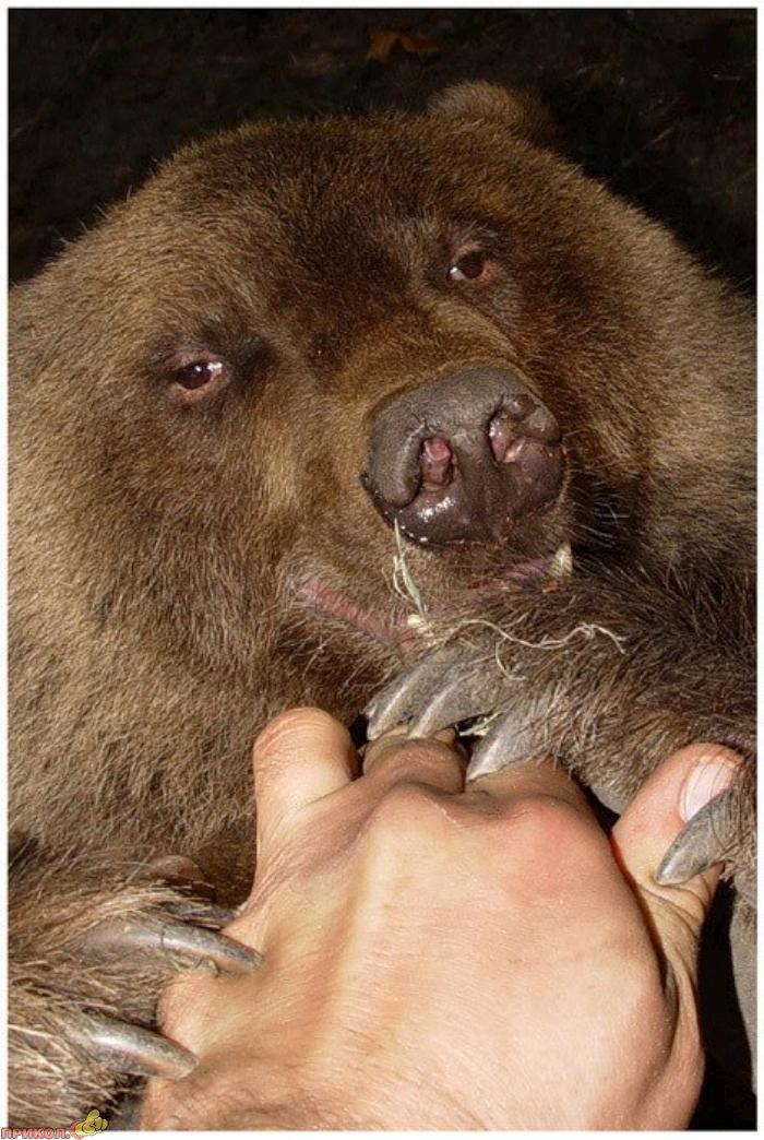 friendly-bears-10