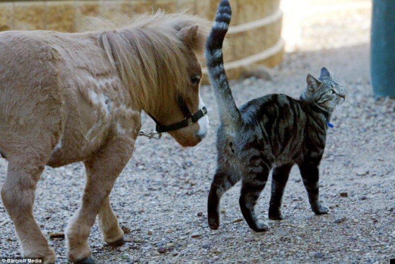 koda-smallest-horse-01
