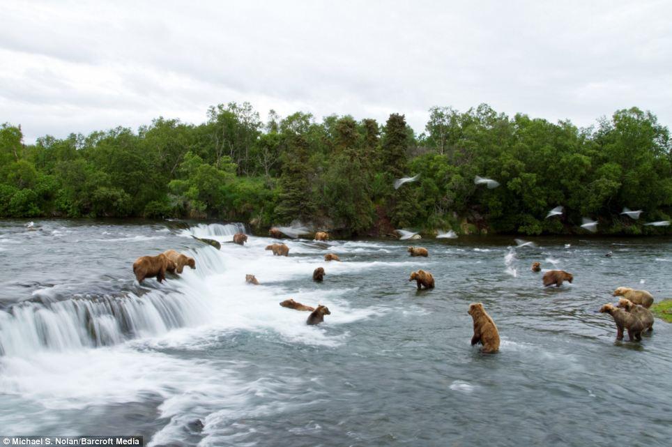 bears-picnic-01