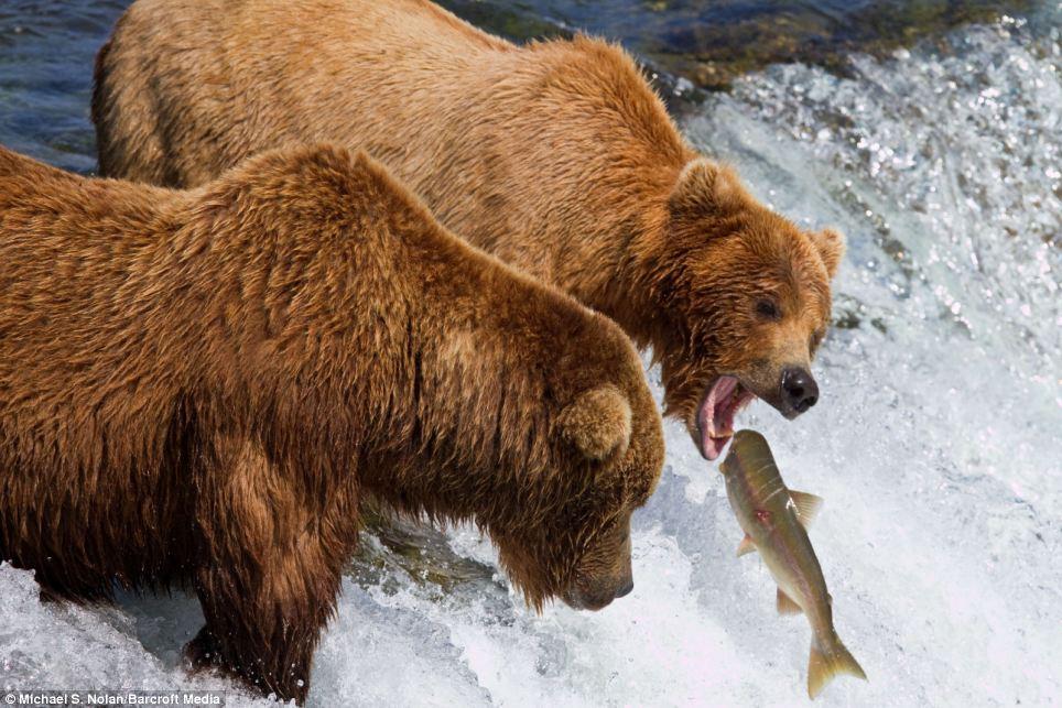 bears-picnic-02