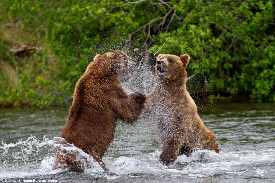 bears-picnic-03