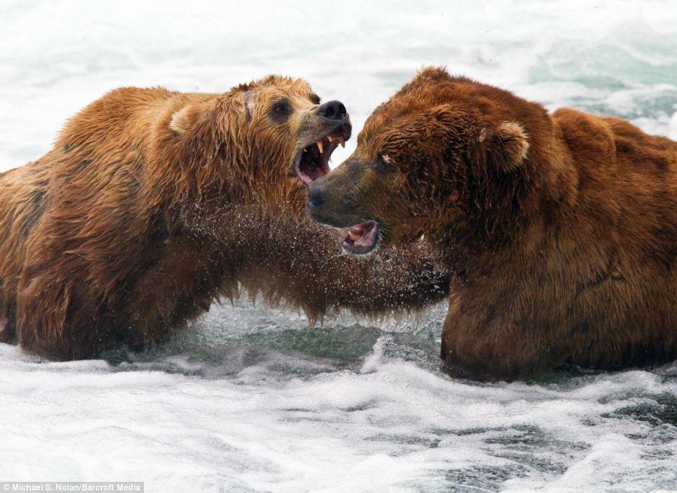 bears-picnic-04