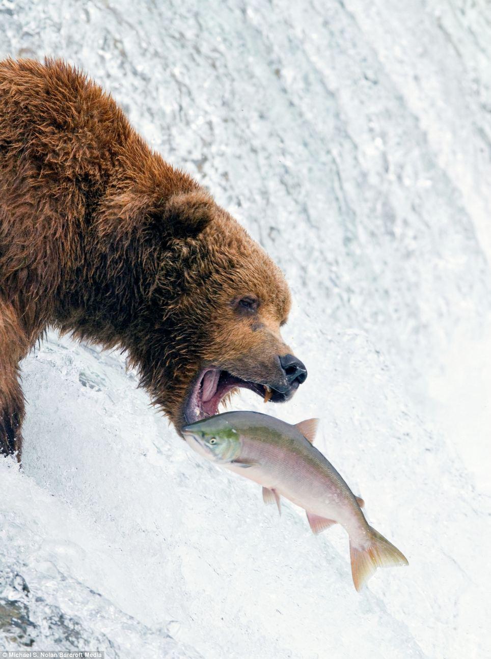 bears-picnic-05