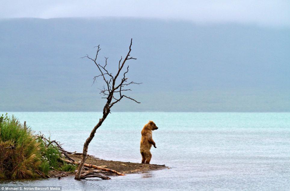 bears-picnic-06