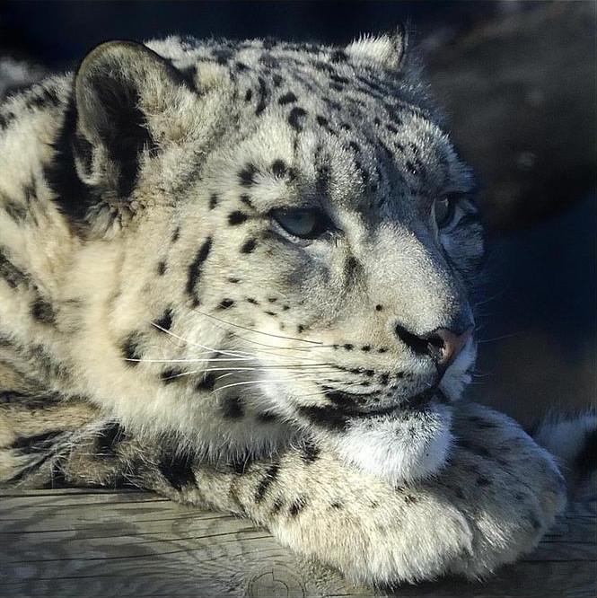 big-cats-10