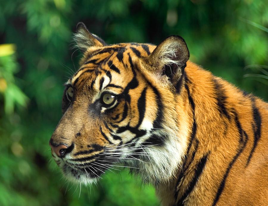 big-cats-17