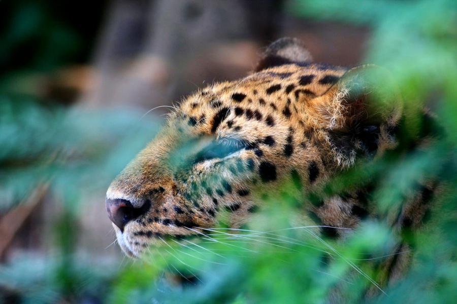 big-cats-23