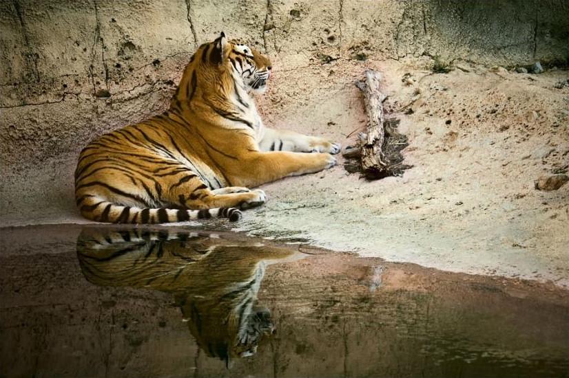 big-cats-25