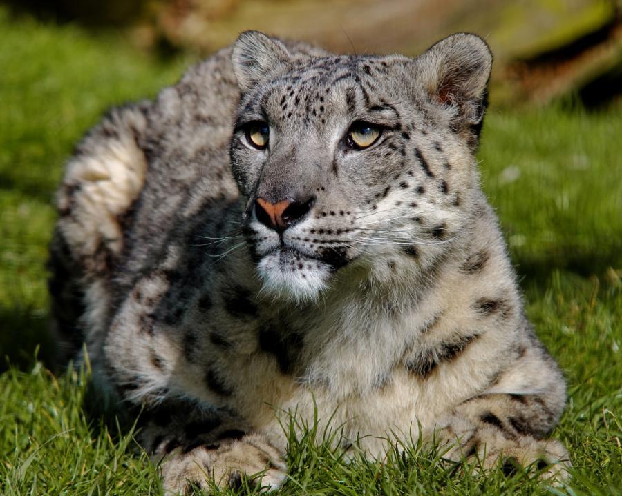 big-cats-42