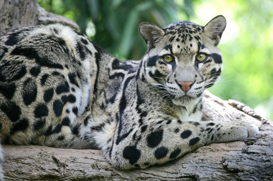 big-cats-67