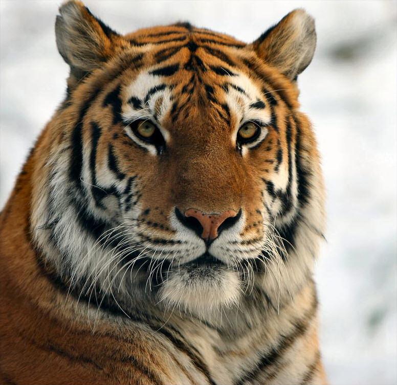 big-cats-72