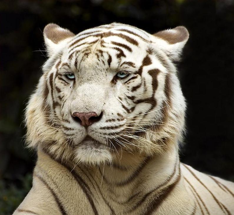 big-cats-73