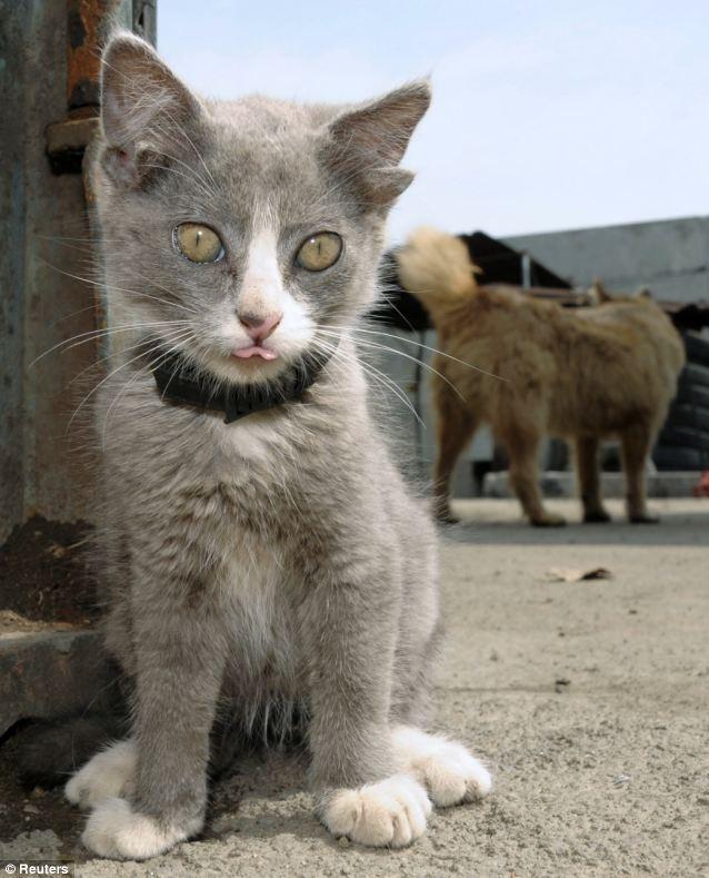 cat-has-four-ears-01
