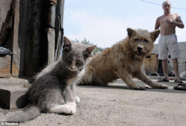 cat-has-four-ears-02