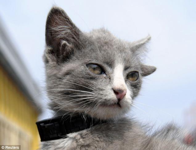cat-has-four-ears-03