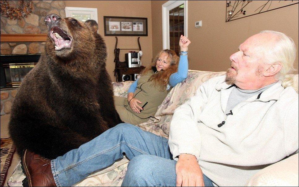 Семья из Ванкувера держит у себя дома медвежонка