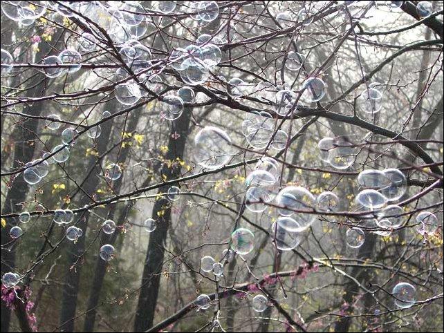 Мыльные пузыри на ветках