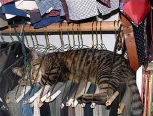 Коты на расслабоне